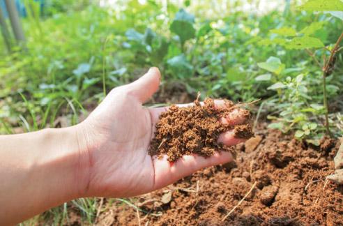 有機肥料の土づくり