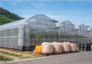 加温型高設ハウス栽培