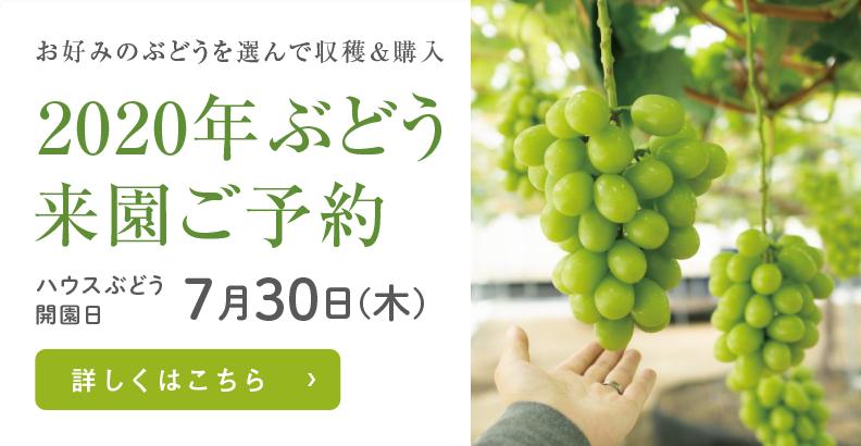 愛媛県西条市の輝らり果樹園2020年のハウスぶどう来園ご予約
