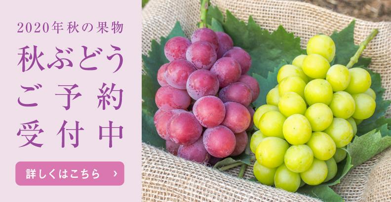 輝らり果樹園の2020秋ぶどう